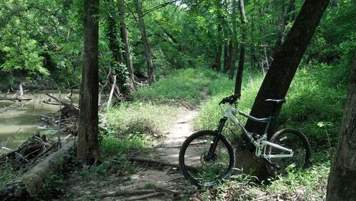 The Anthills Trail via Blue Jay Trail