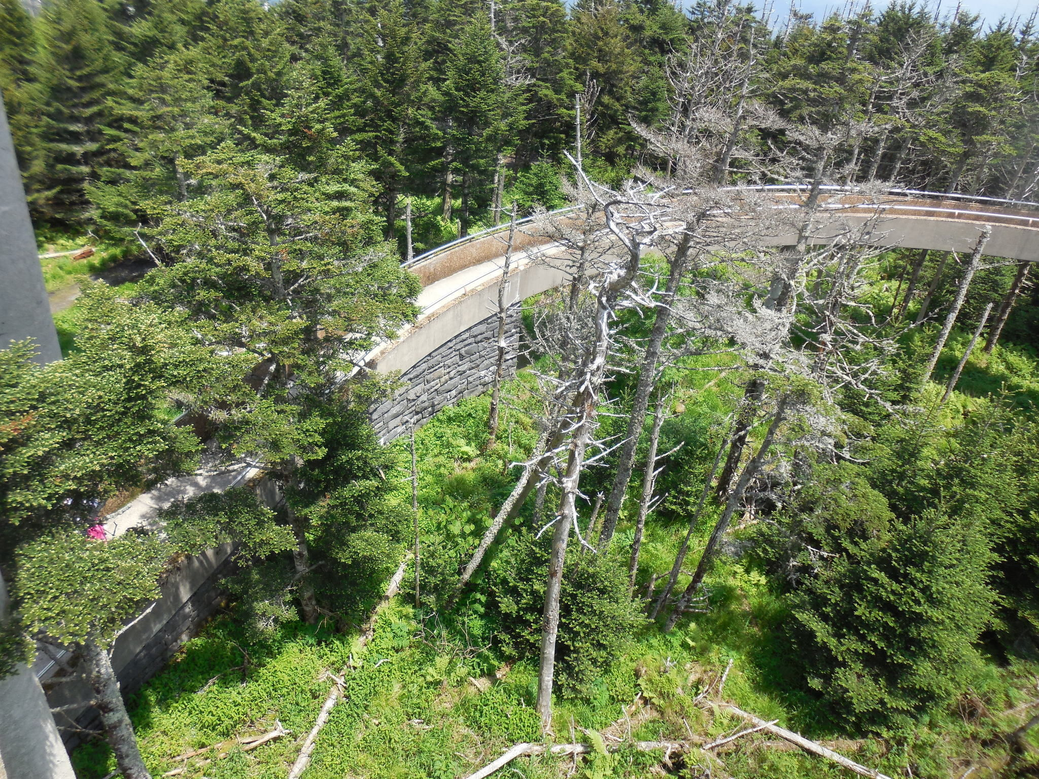 Newfound Gap to Clingmans Dome Trail - North Carolina ...