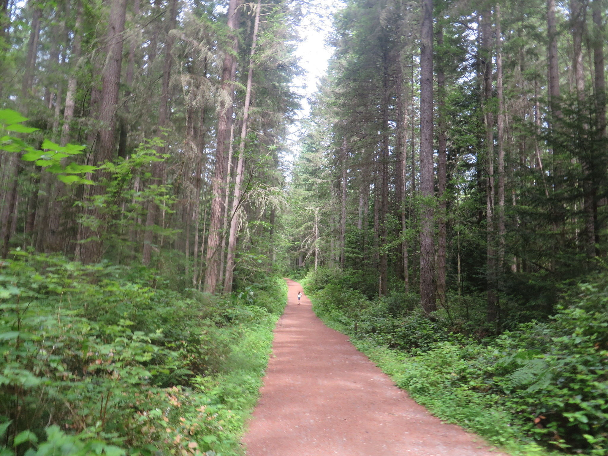 Best Trails in Banner Forest Heritage Park - Washington ...