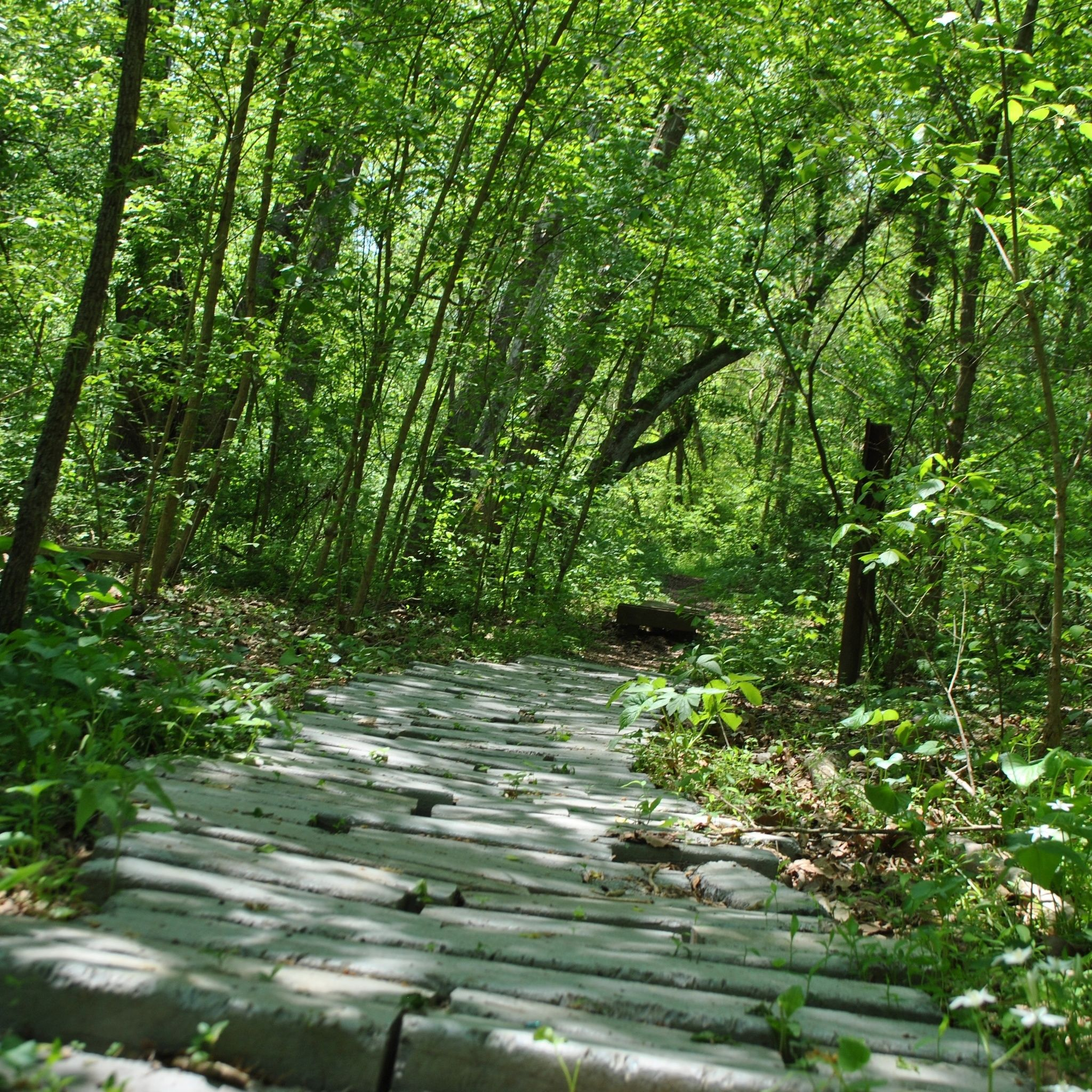 Warriors Path State Park Stables: Sinking Waters Trail - Tennessee