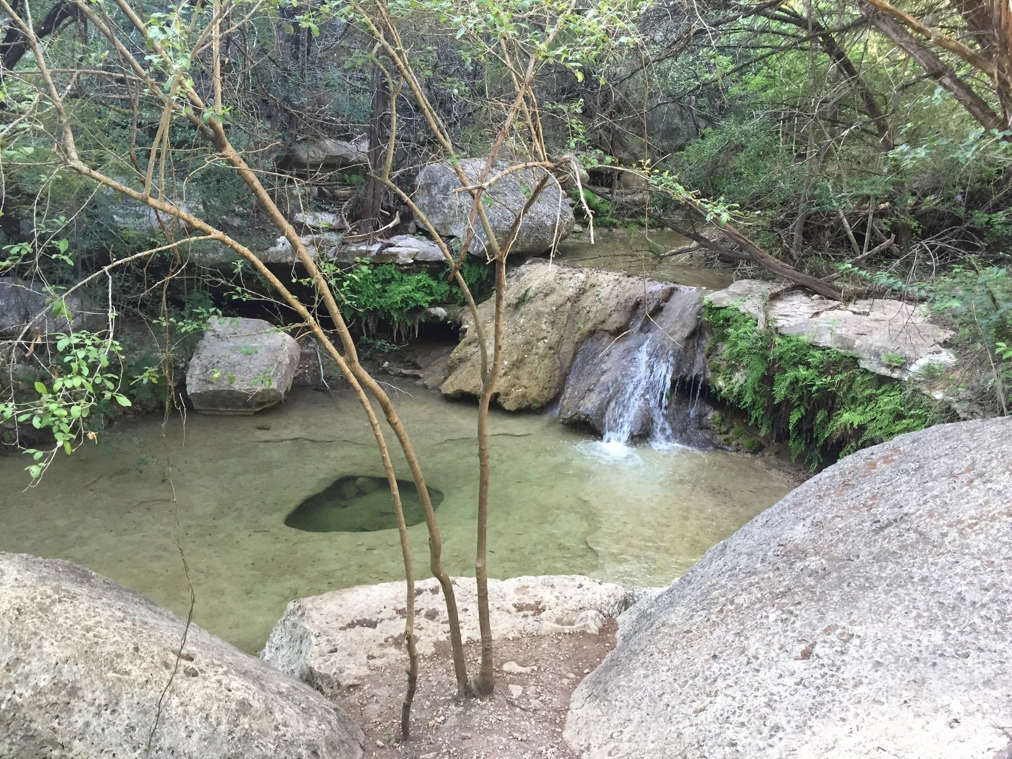 Best Places To Hike With Dogs In Austin