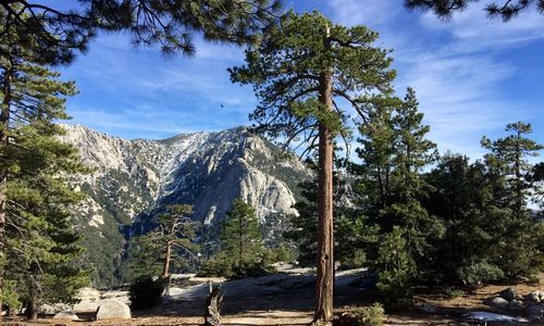 Marion Mountain to San Jacinto - California | AllTrails