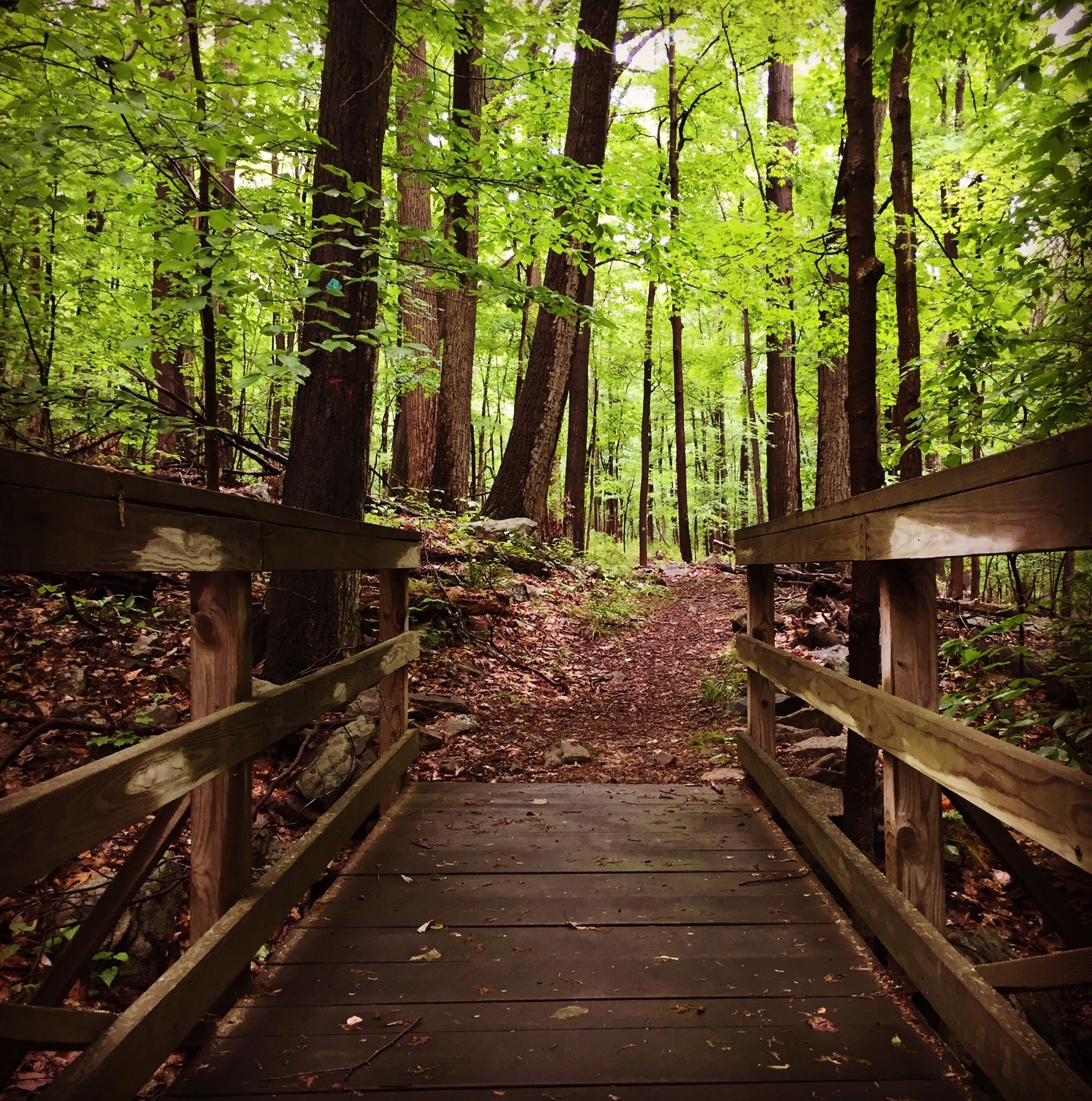 Best Trails in Voorhees State Park - New Jersey | AllTrails