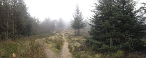 Dalby Forest
