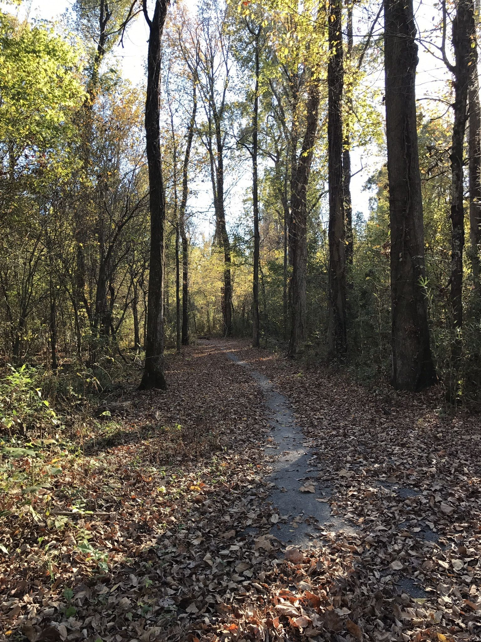 Best Trails in Reelfoot Lake State Park - Tennessee | AllTrails