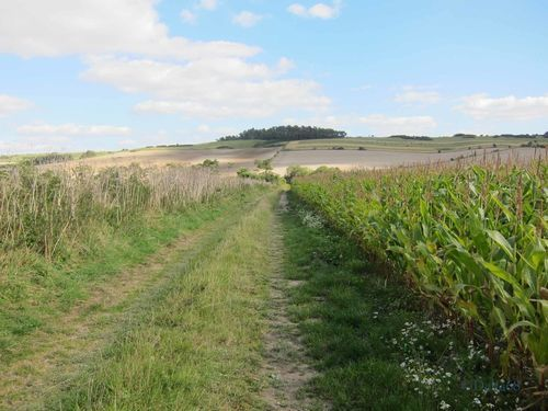 Cranborne Chase and West Wiltshire Downs Area of Outstanding Natural Beauty