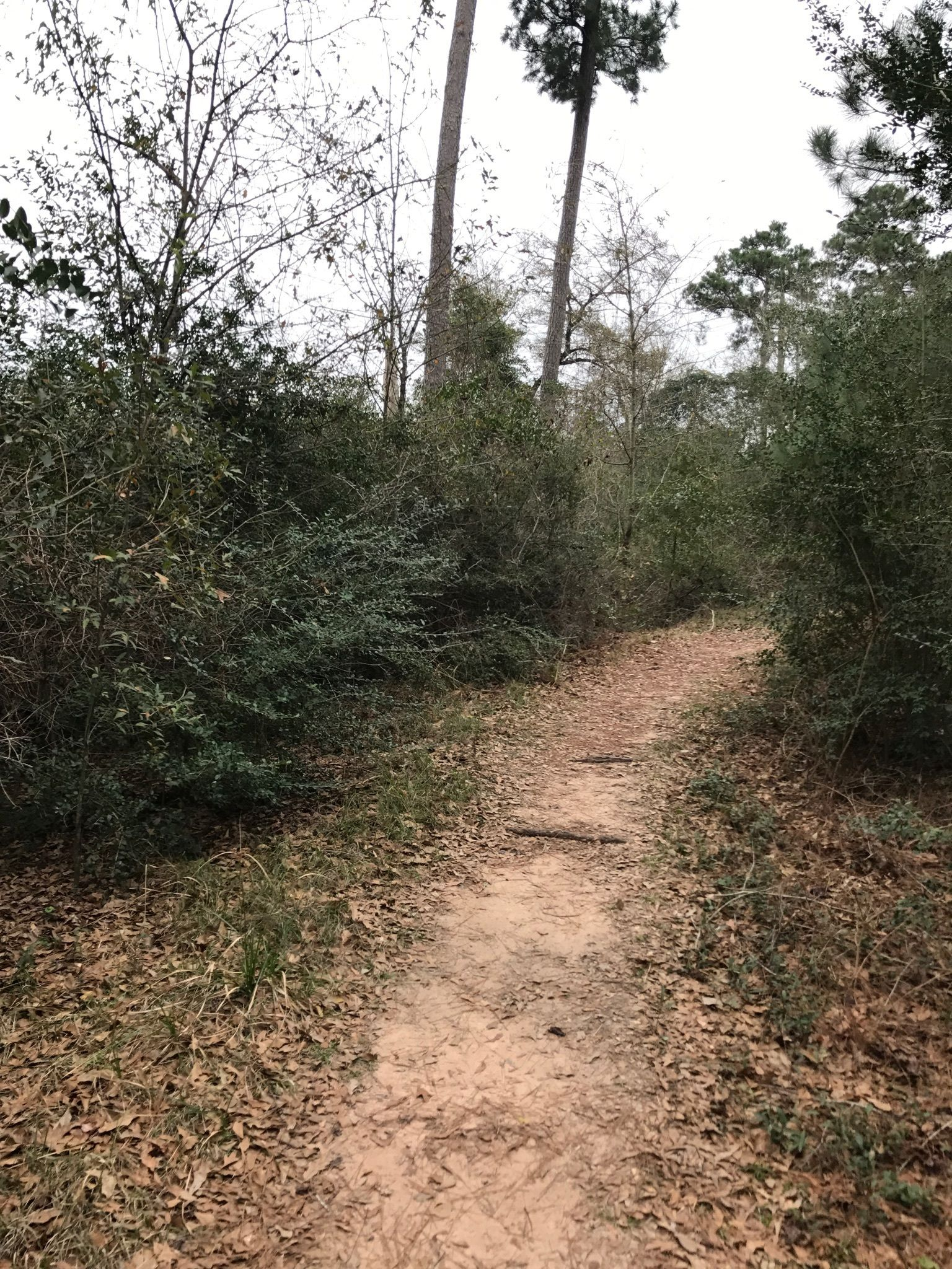 Cypress Creek Trail - Texas | AllTrails on map of rivergate, map of fairview, map of waters edge, map of maplewood, map of lakeside, map of centerville, map of westfield, map of riverdale, map of san marcos river, map of wekiva, map of lamar, map of riverside, map of park place, map of summerfield, map of spring lake, map of greenbriar, map of jacobs well, map of riverbend, map of downtown bradenton, map of the orange river,