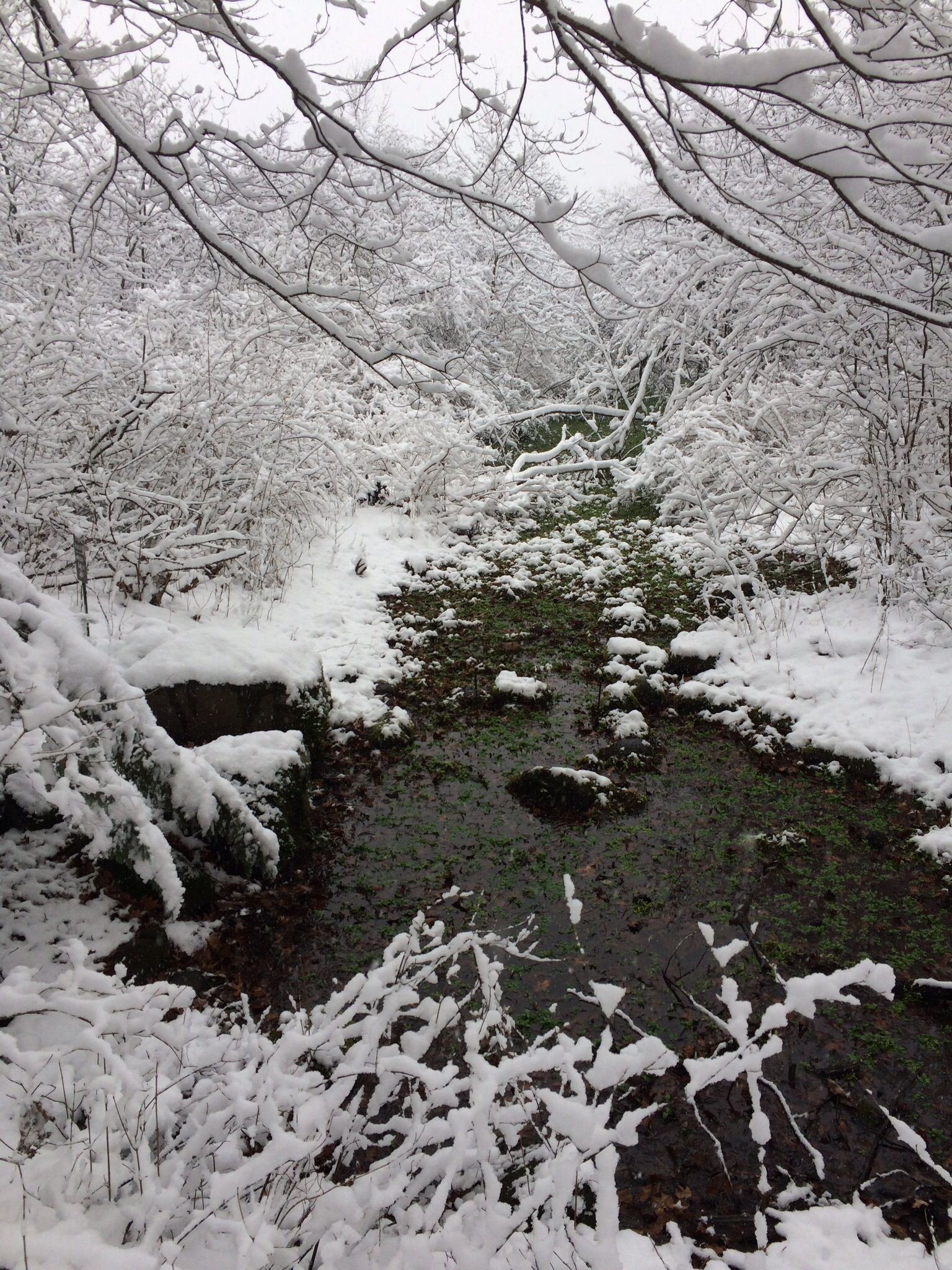 Walking By Wingra Creek In Snow >> Best Wild Flowers Trails Near Madison Wisconsin Alltrails
