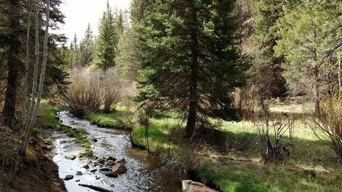 Image result for lovell gulch trail fall