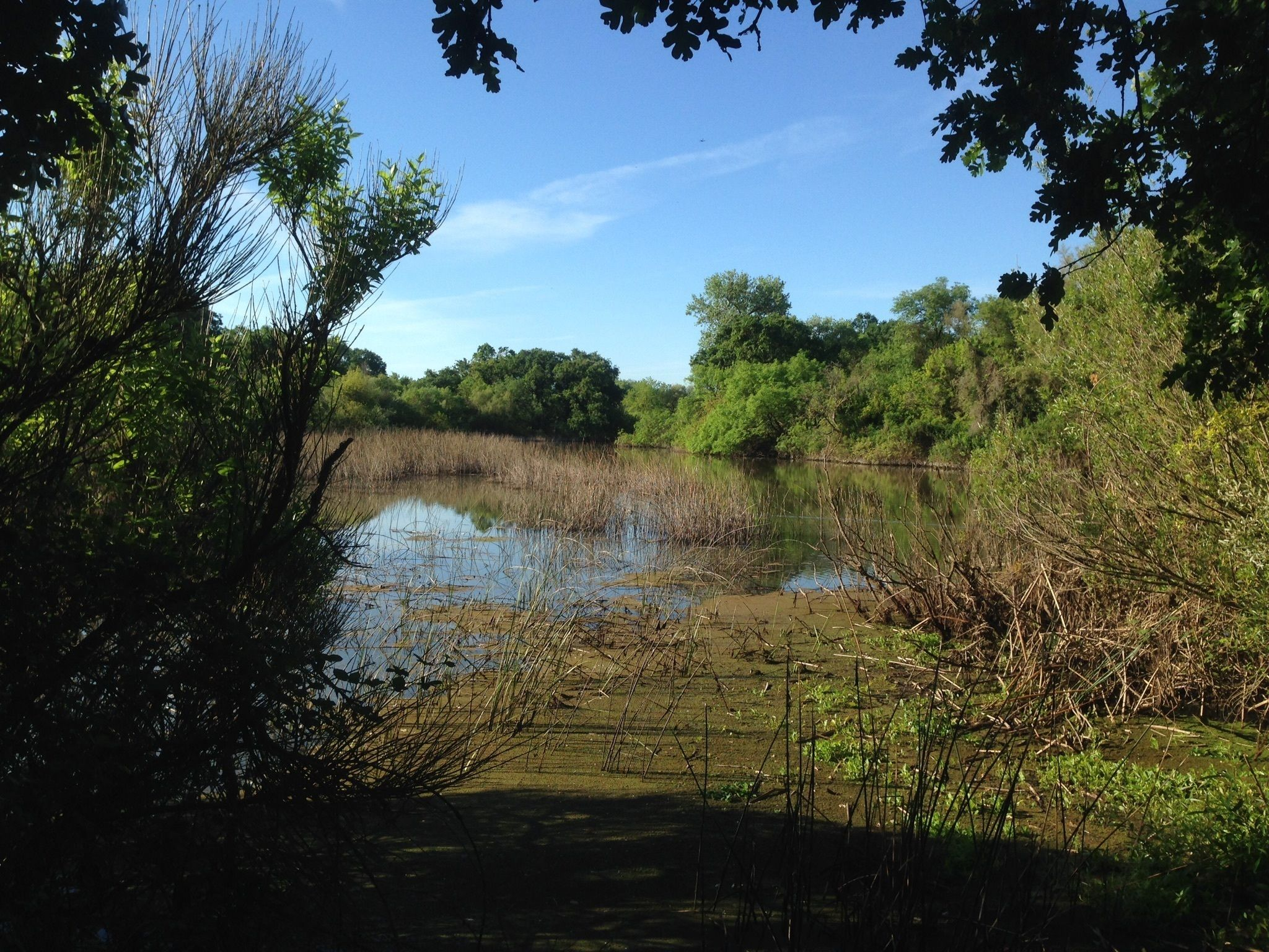 Cosumnes River Walk Trail - California | AllTrails