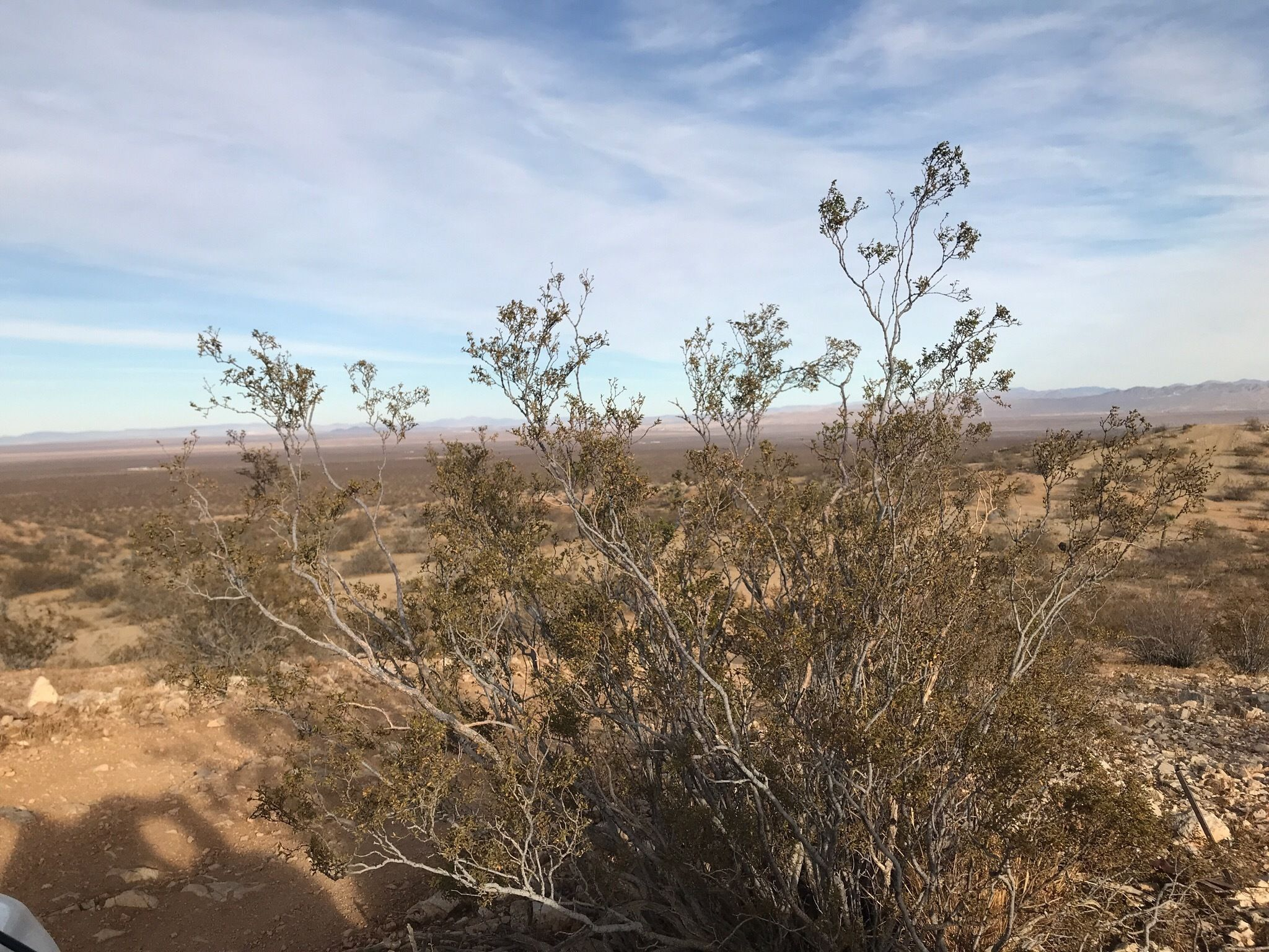 Best Trails in El Mirage Recreation Management Area