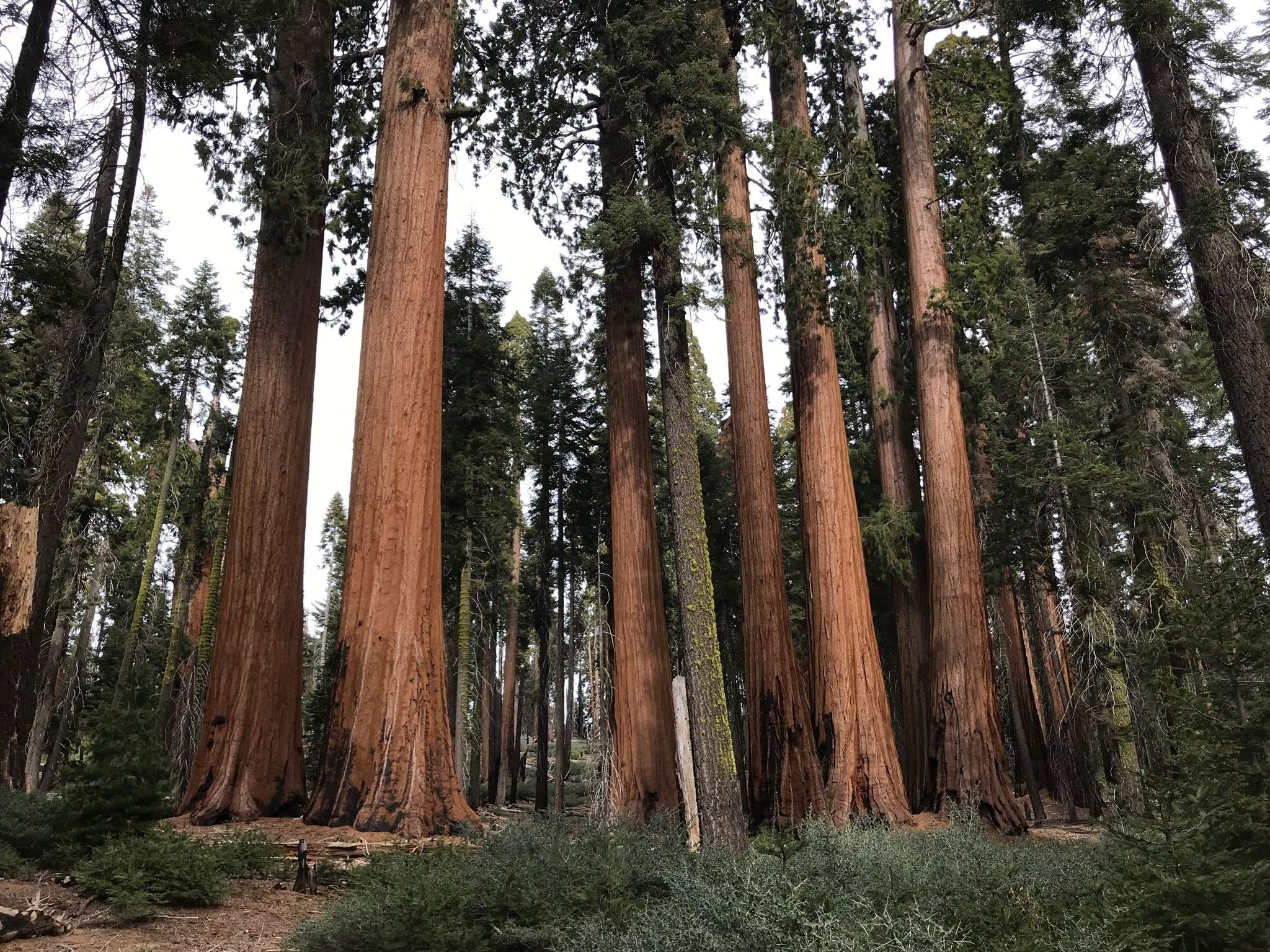 Best Trails in Sequoia National Park | AllTrails