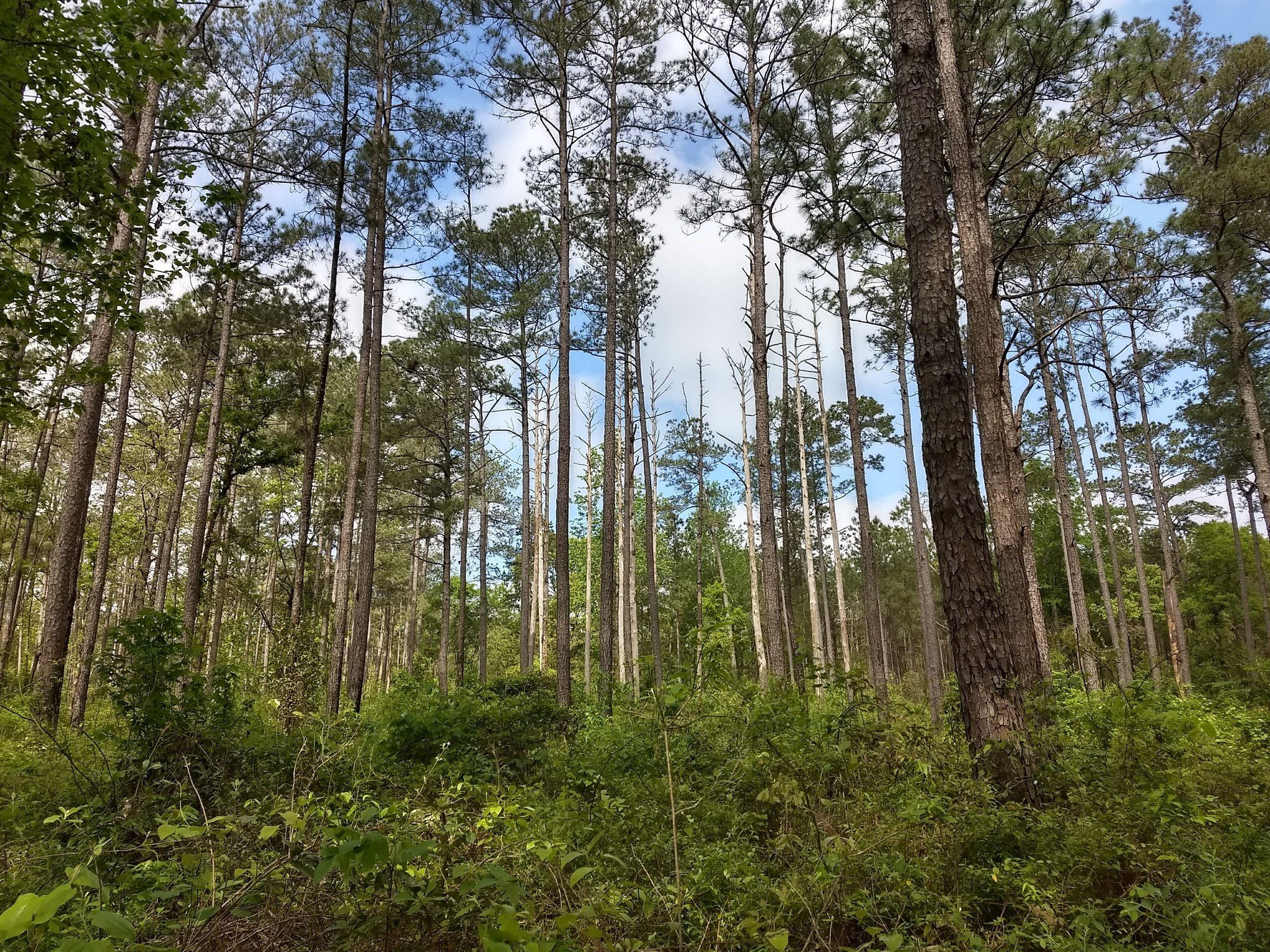 Best Trails in Kisatchie National Forest - Louisiana | AllTrails on