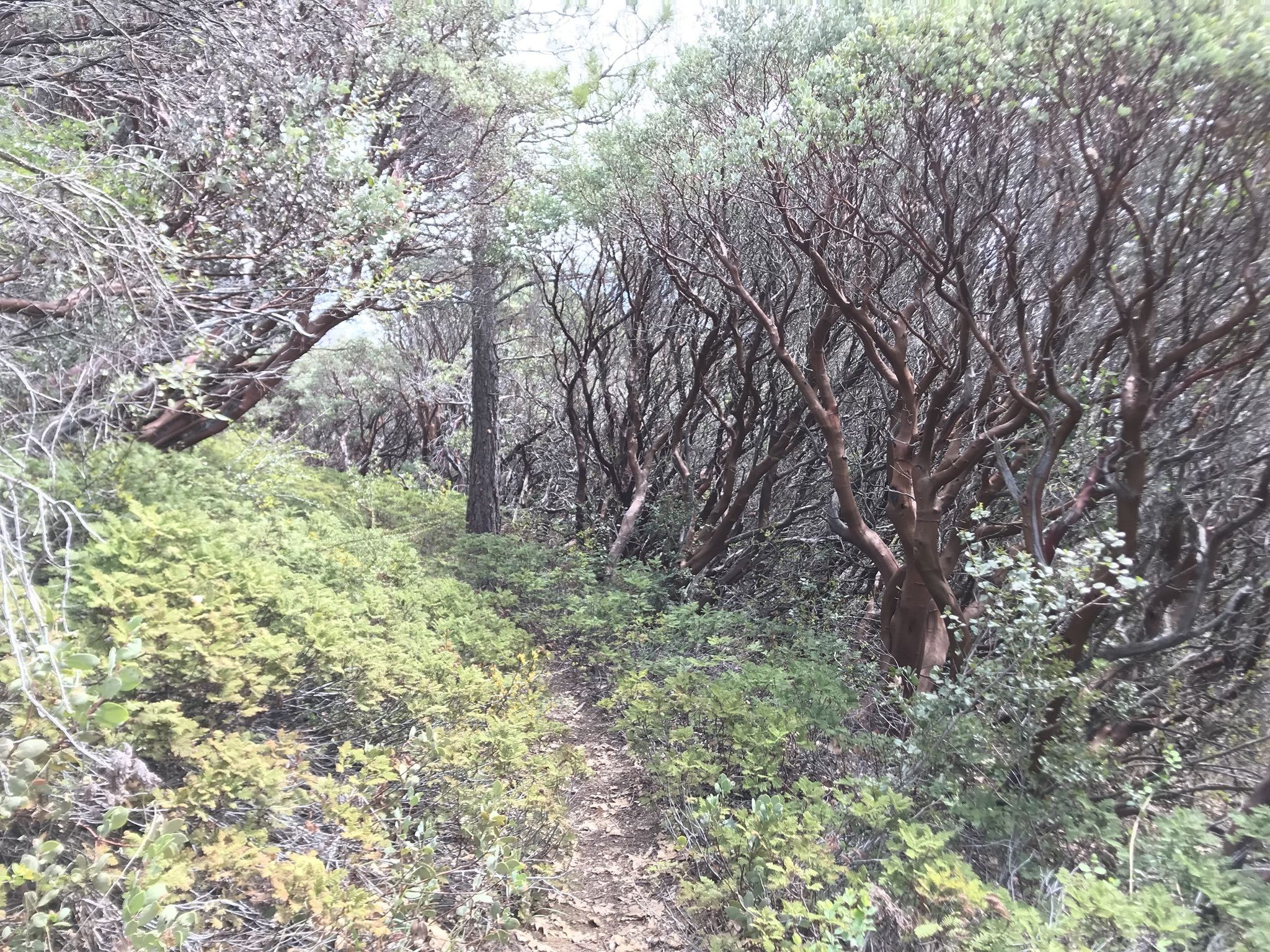 Bearpaw Meadow to Redwood Meadow Trail - California | AllTrails