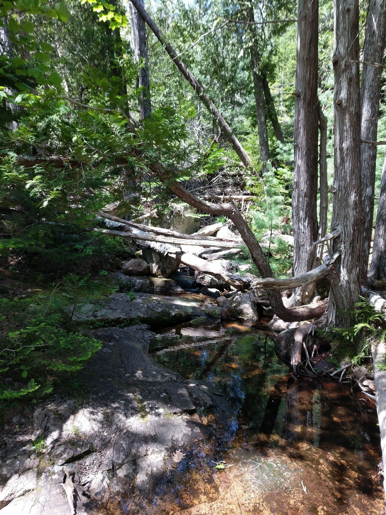 Acadia For Sale >> Best Waterfall Trails in Acadia National Park   AllTrails