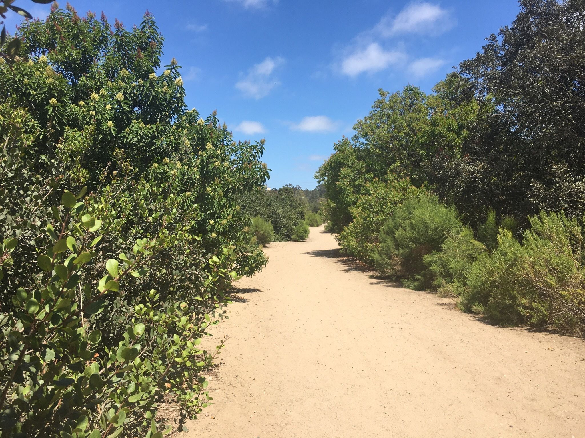 Image result for tecolote canyon trail