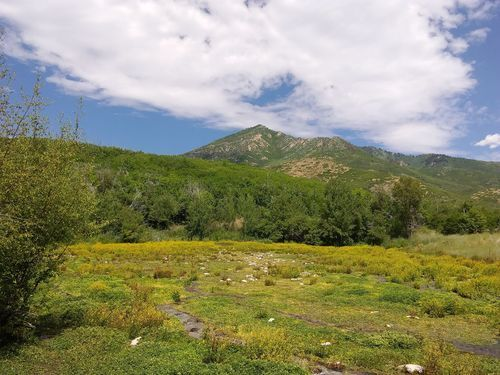 Wasatch Mountain State Park