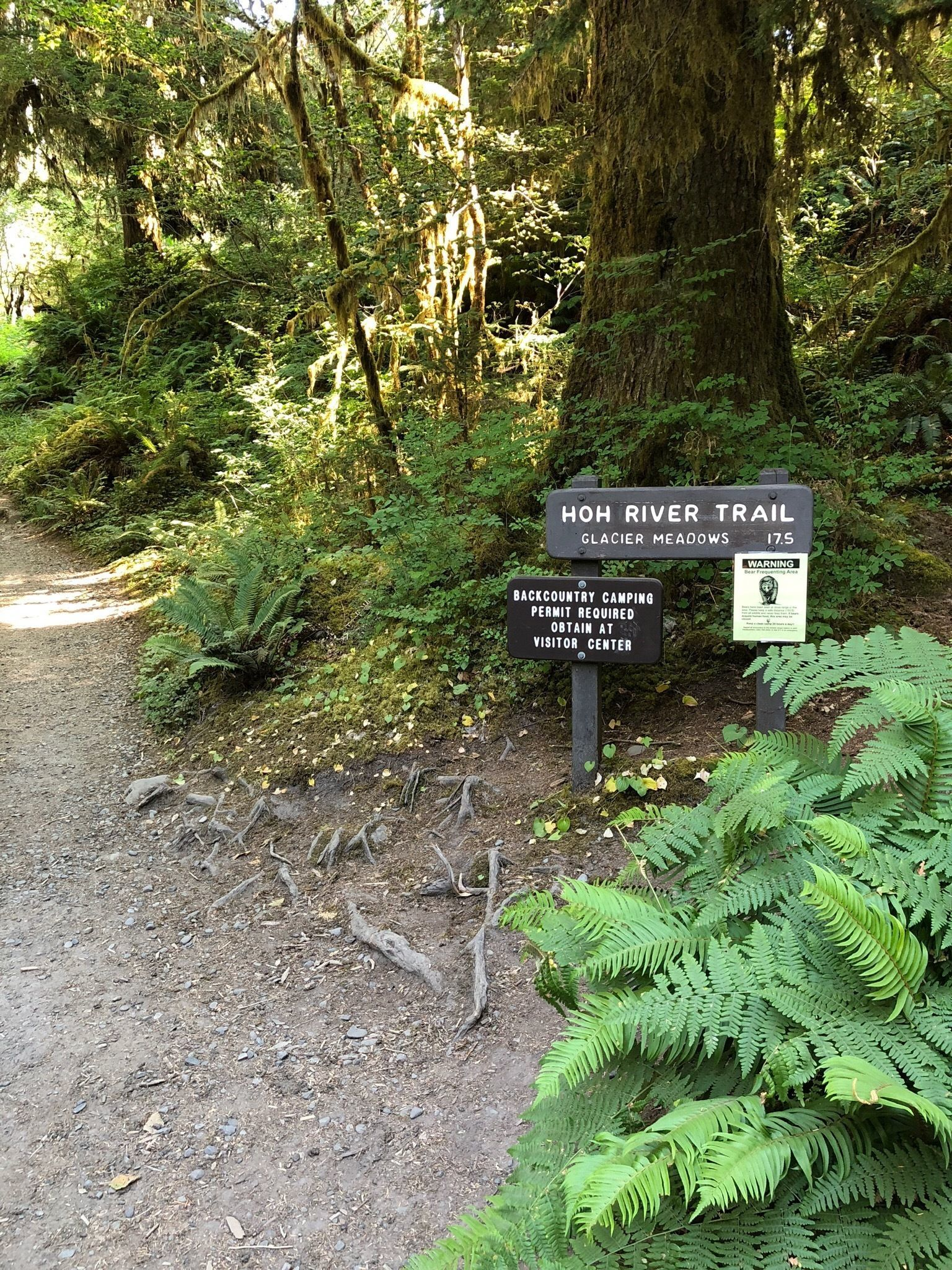 e6216f320e Hoh River Trail - Washington