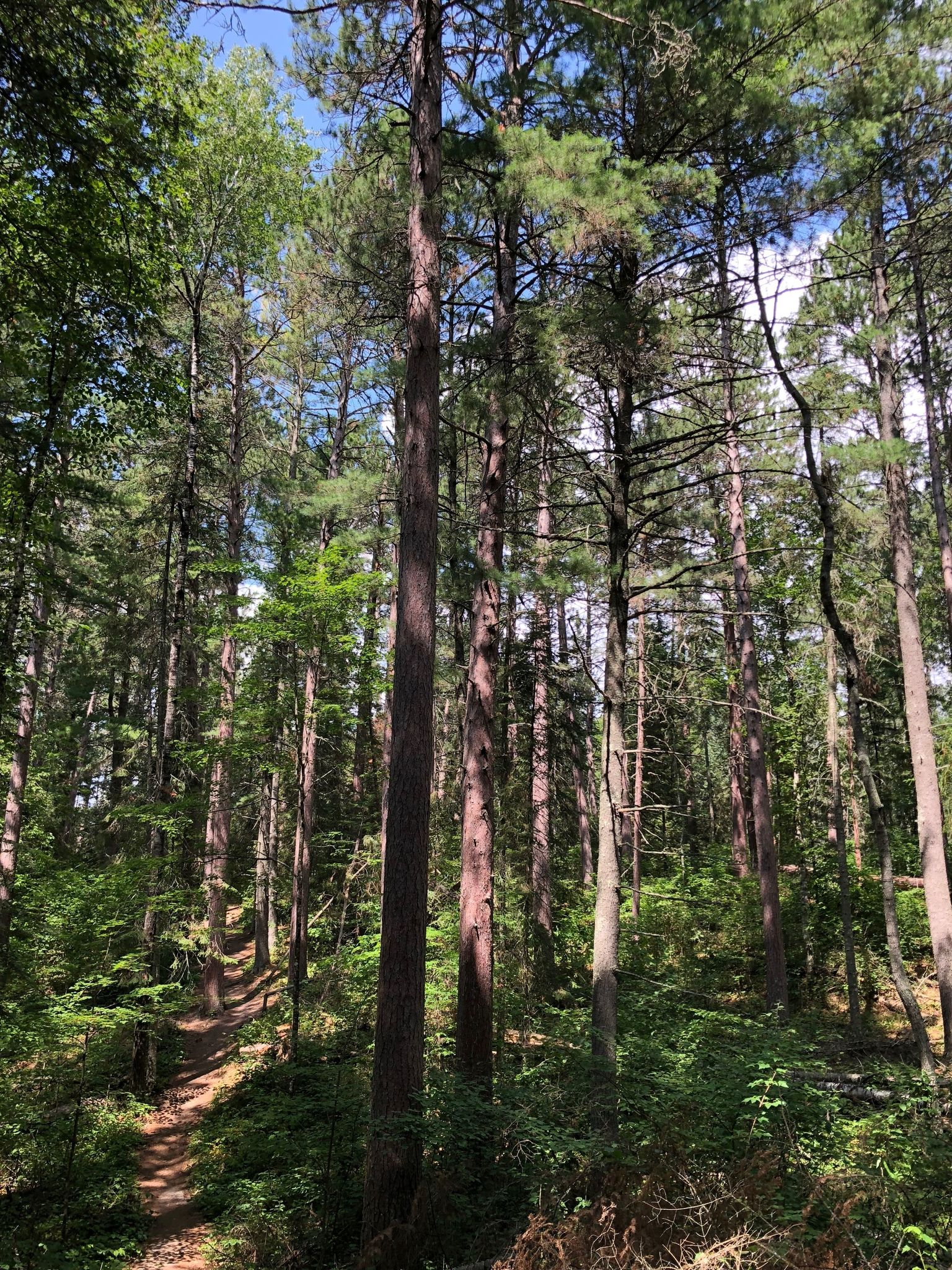 Best Trails in Chippewa National Forest - Minnesota | AllTrails