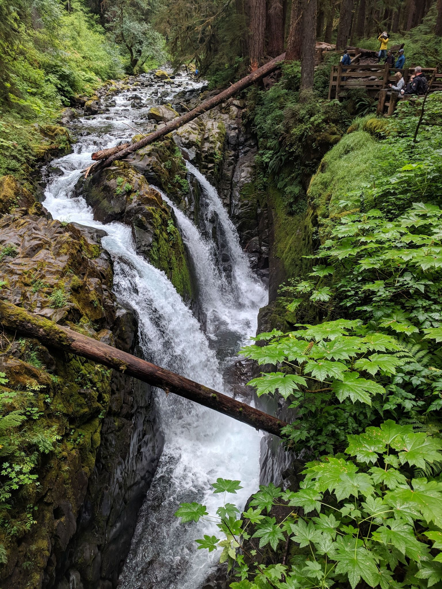 Best Trails in Olympic National Park | AllTrails