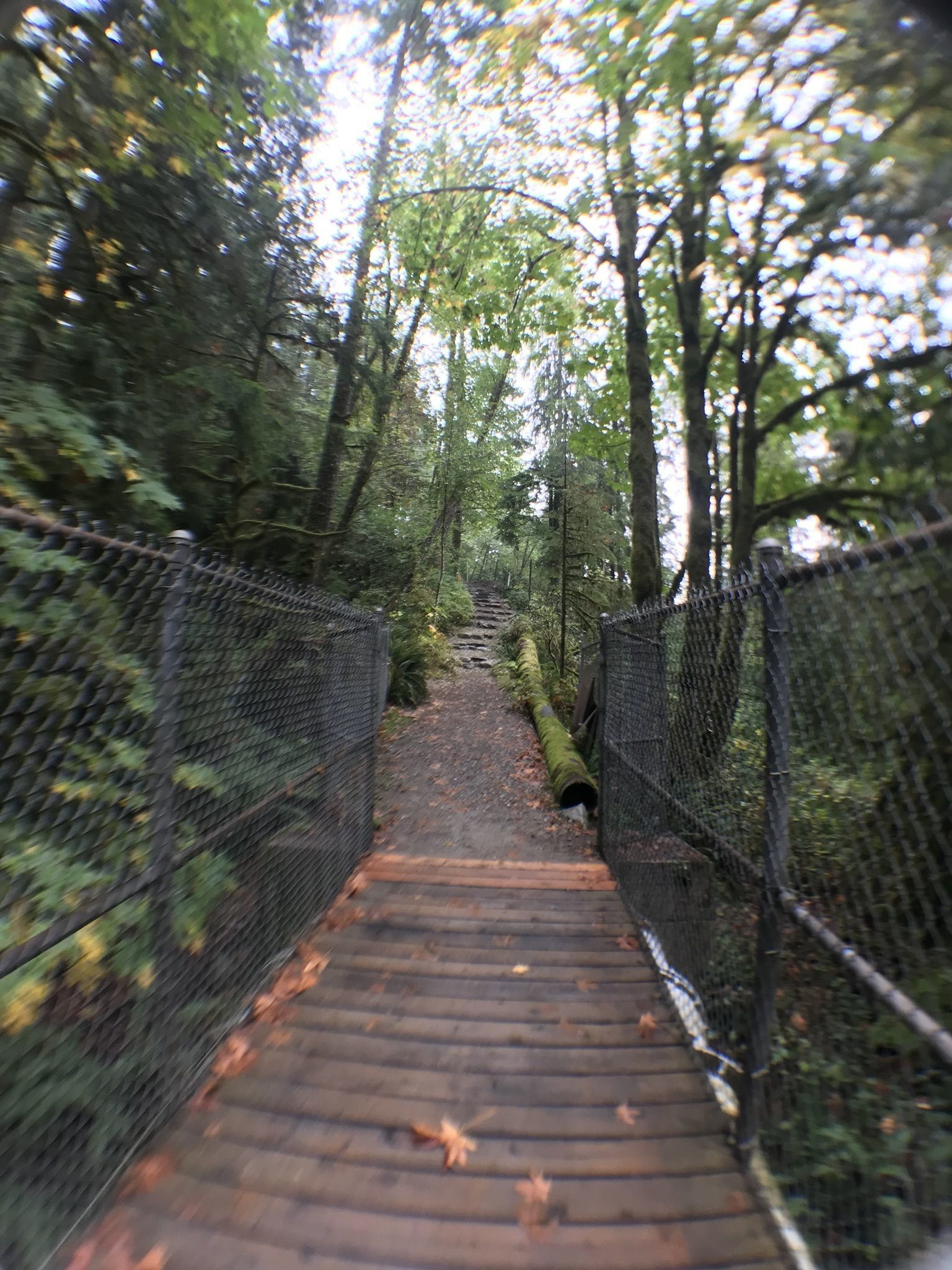 fishermans trail best fall hikes in vancouver