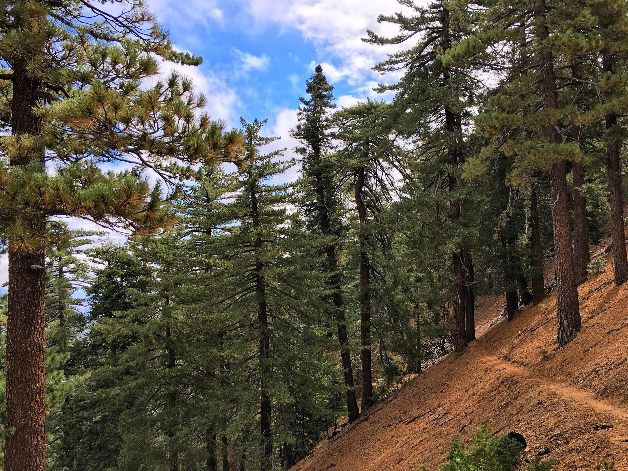 Reyes Peak Trail - California | AllTrails