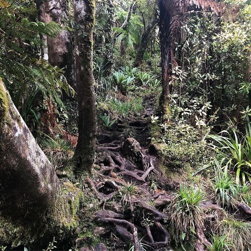 Mount Pirongia Forest Park
