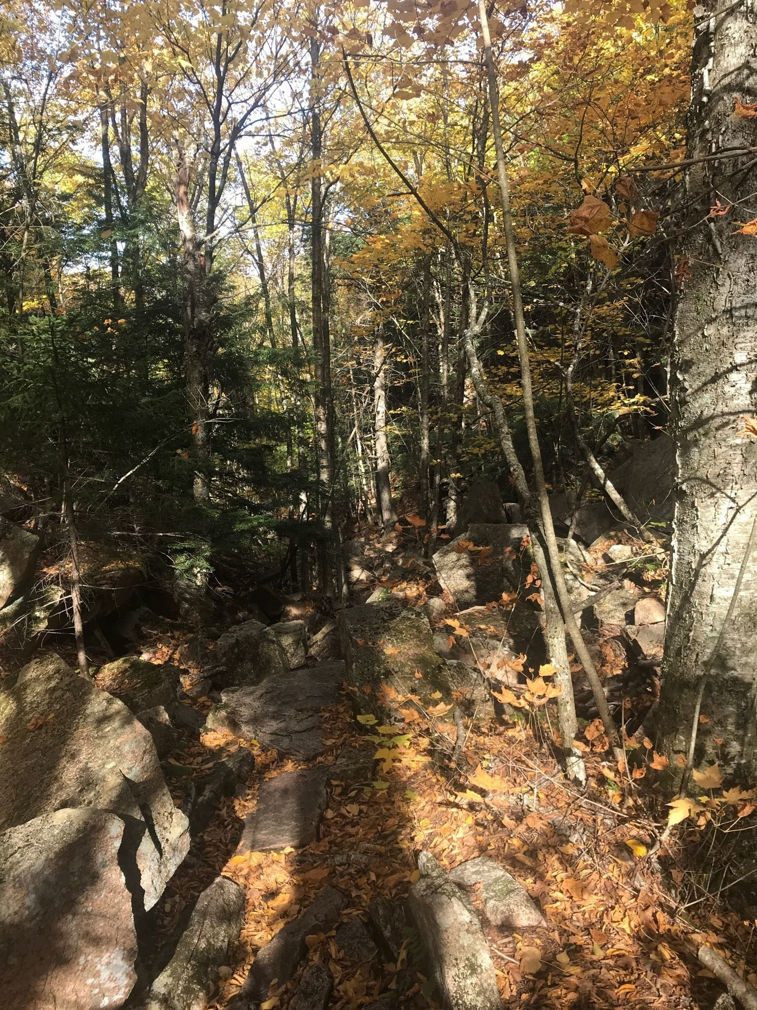Acadia For Sale >> Best Waterfall Trails in Acadia National Park | AllTrails