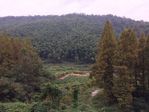 Tiantong Forest Park