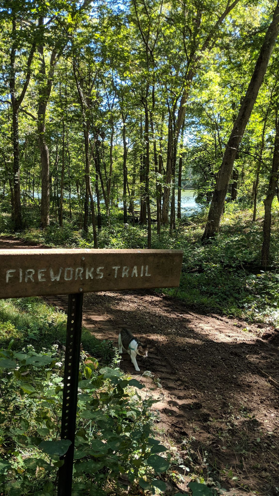Patriots, Fireworks and Fisherman's Trails - Illinois