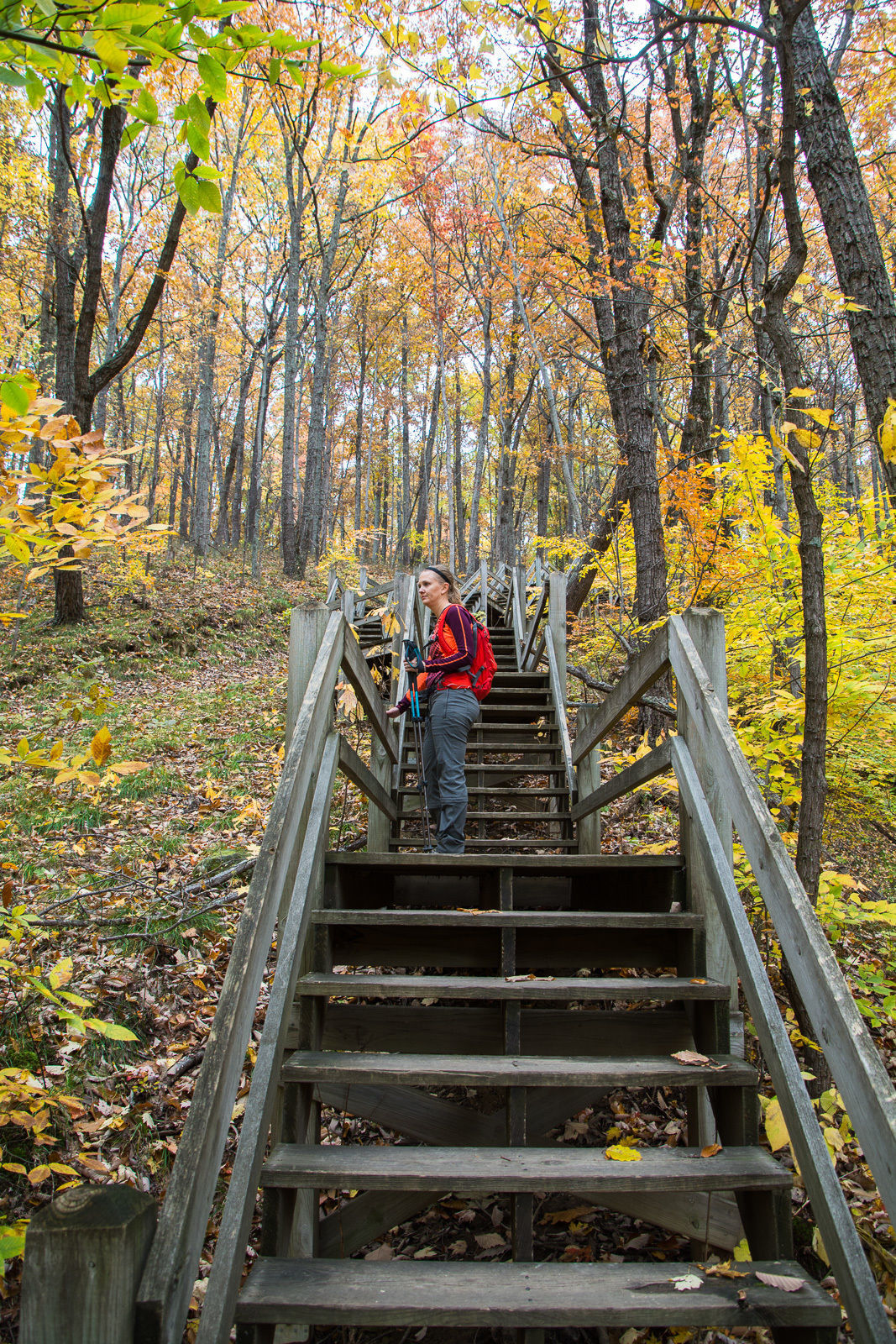 Fire Tower Trail (10) at Brown County State Park - Indiana ...