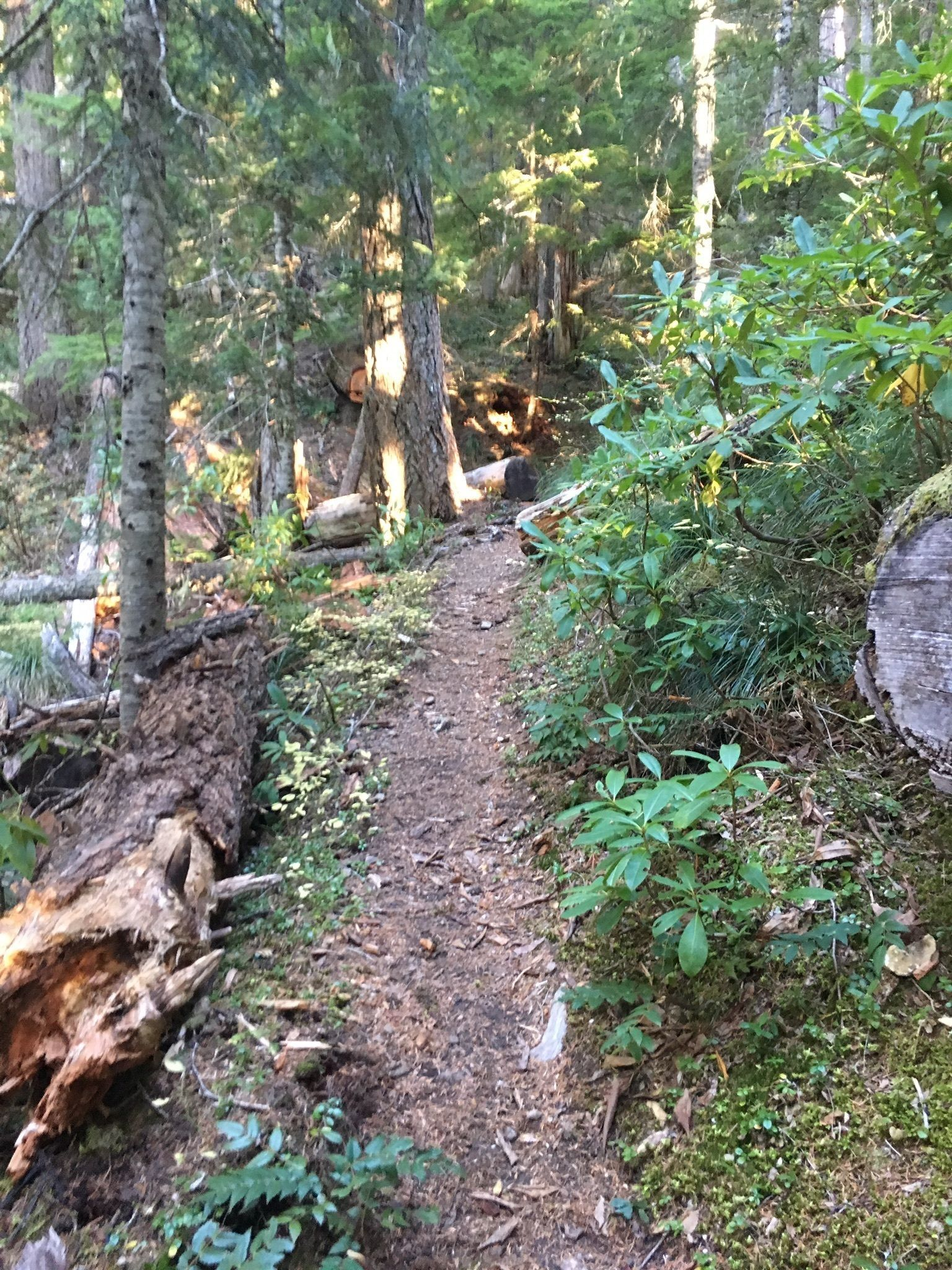 Whetstone and Opal Creek to Bagby Hot Springs - Oregon | AllTrails