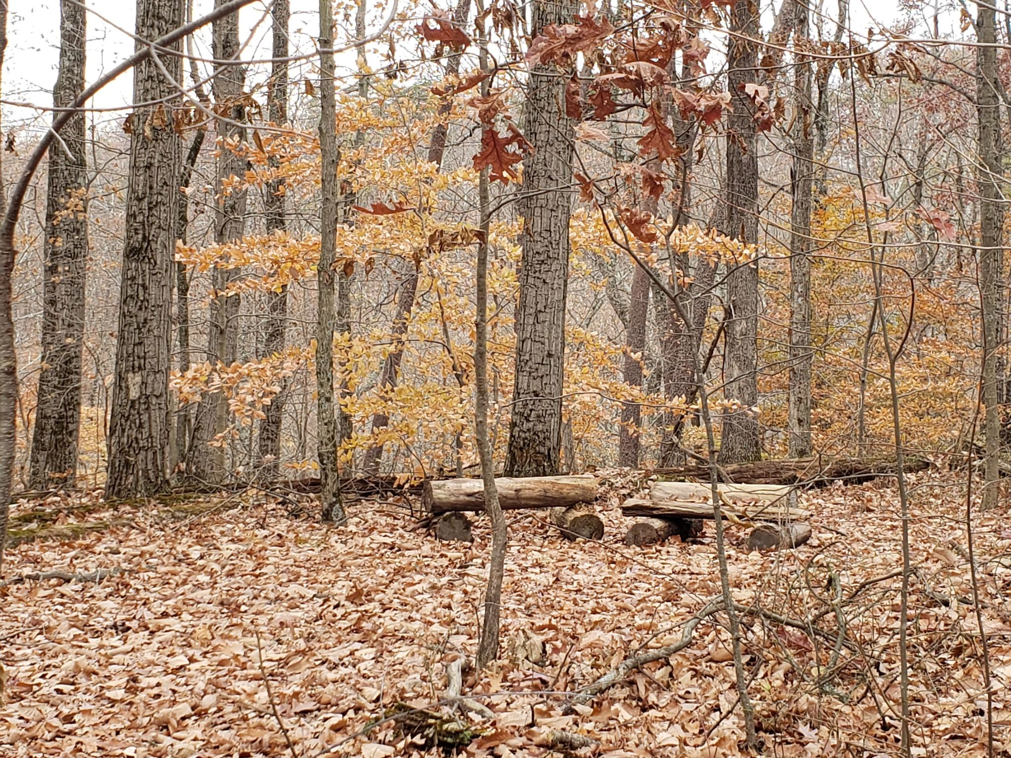 best trails in clark state forest