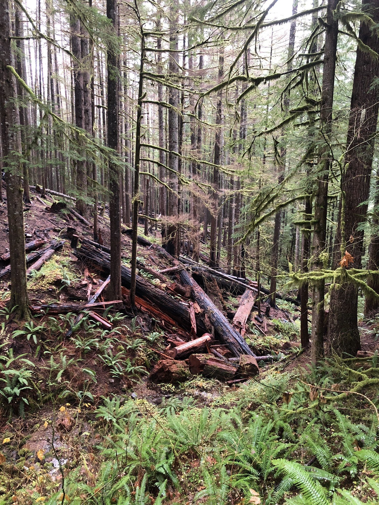 Best Camping Trails in Gifford Pinchot National Forest