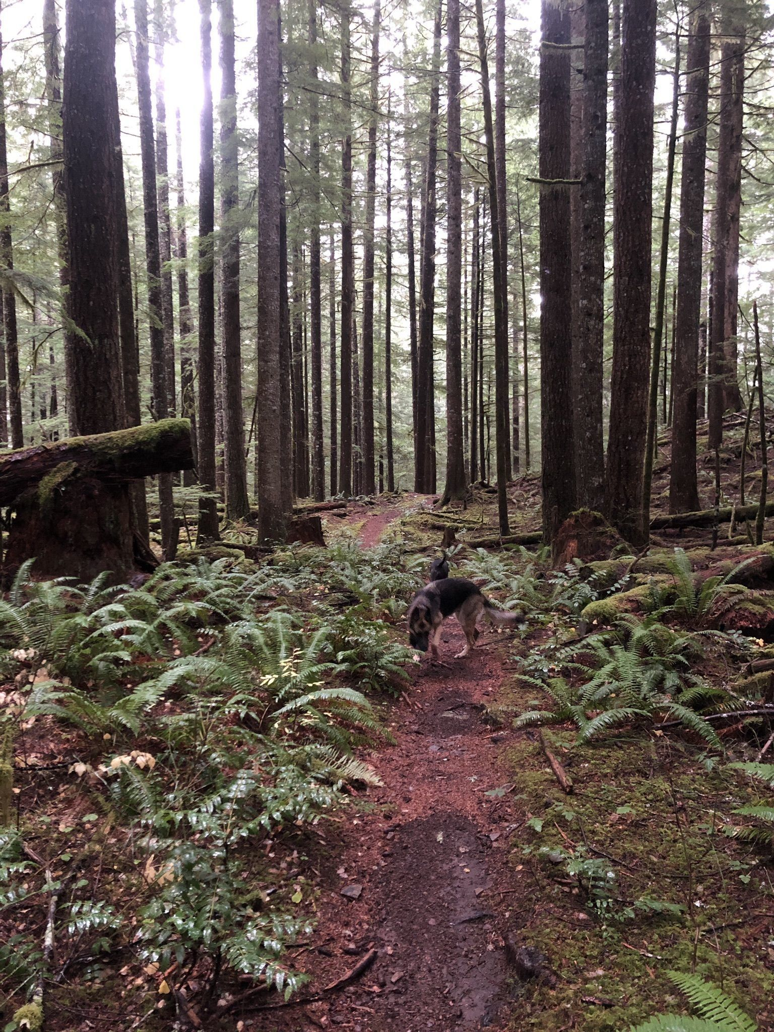 Best Camping in and Near Gifford Pinchot National Forest