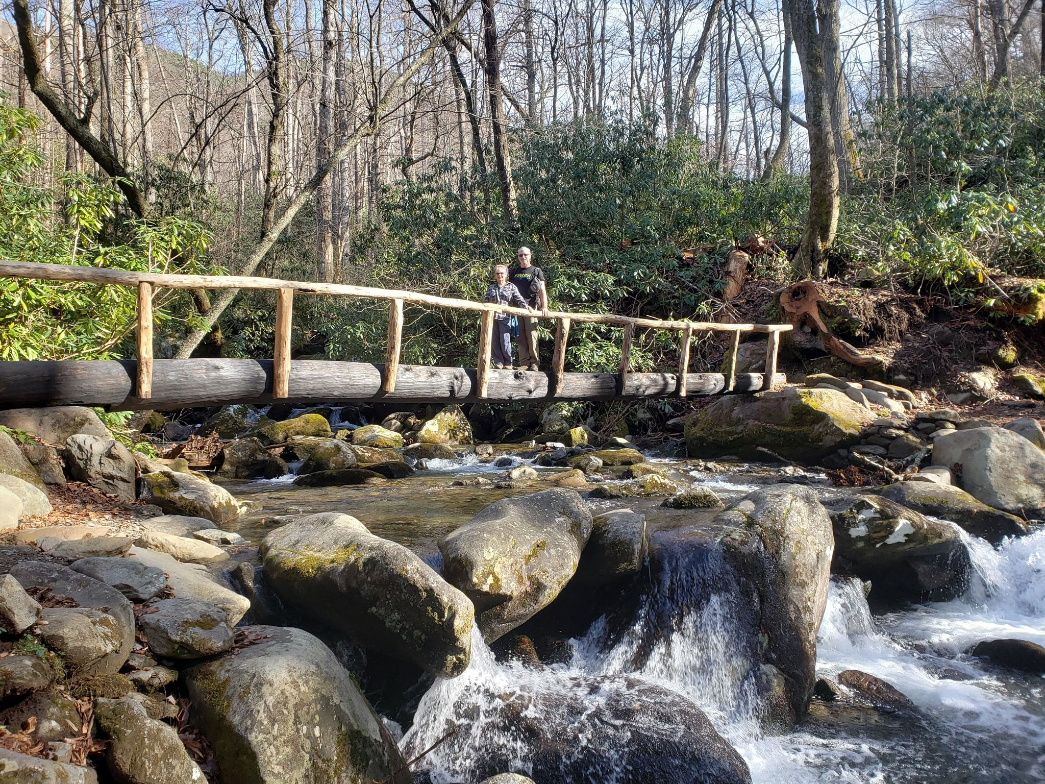 Maddron Bald Trail to Albright Grove Loop - Tennessee | AllTrails