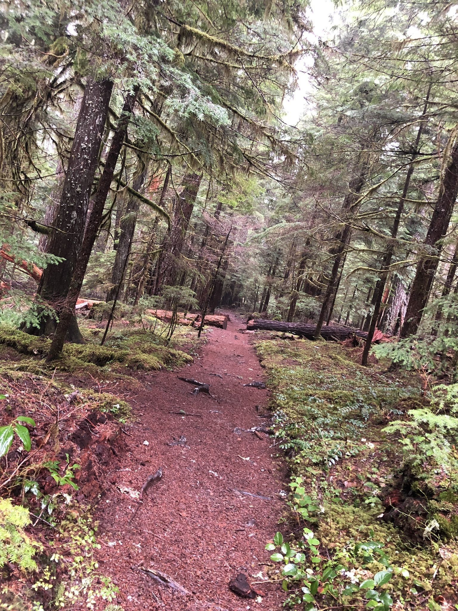 Photos of Bagby Hot Springs Trail - Oregon | AllTrails