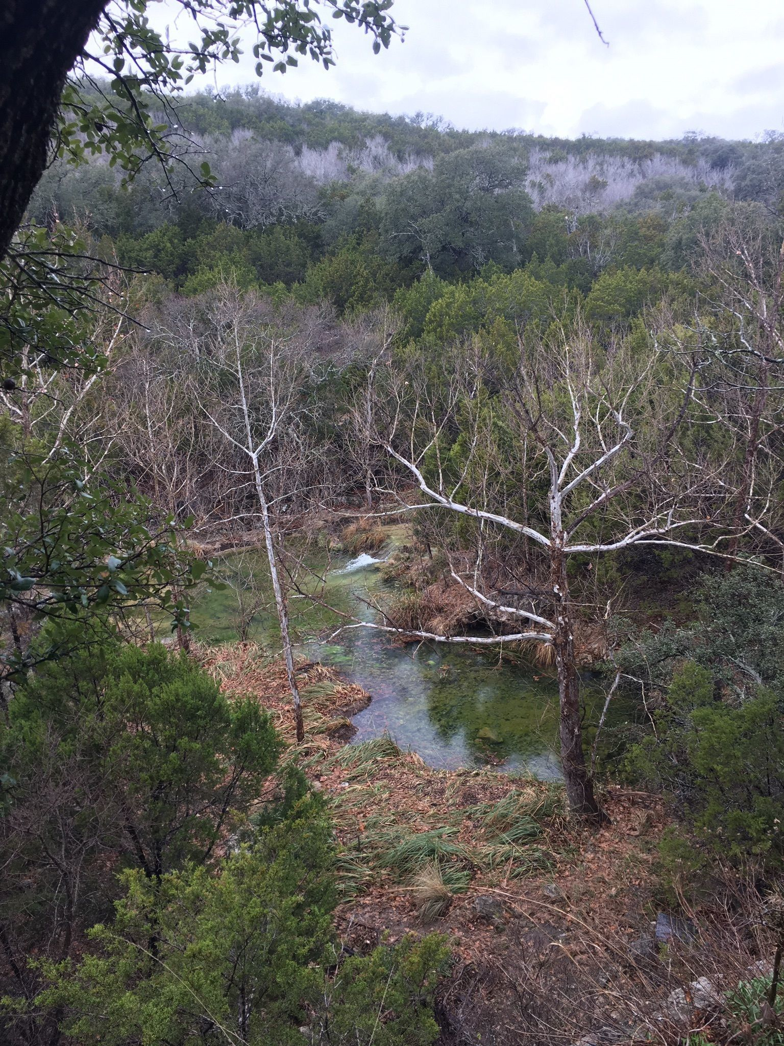 Best Trails in Colorado Bend State Park - Texas   AllTrails