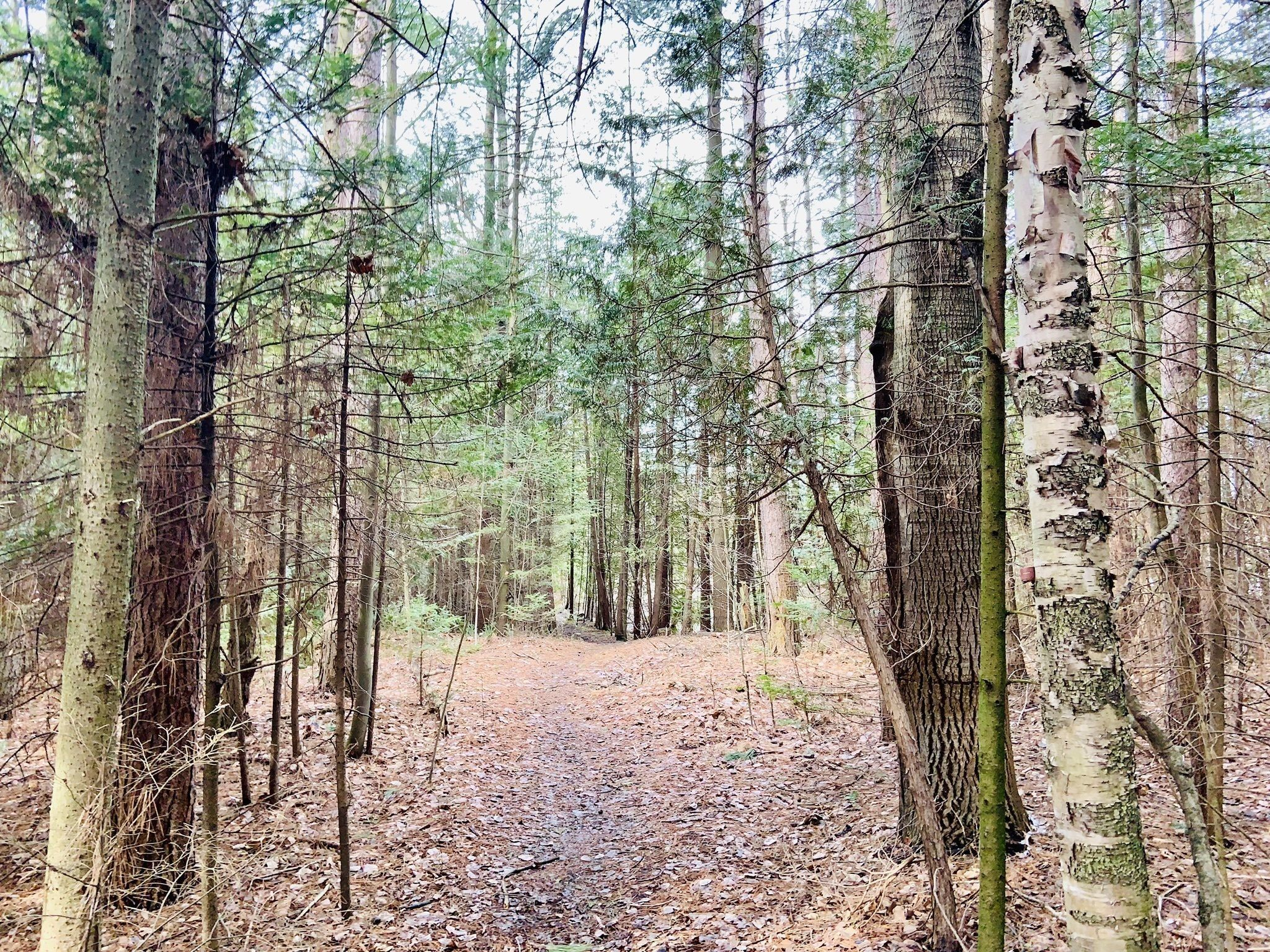 Scout Tract Regional Forest - Ontario, Canada | AllTrails