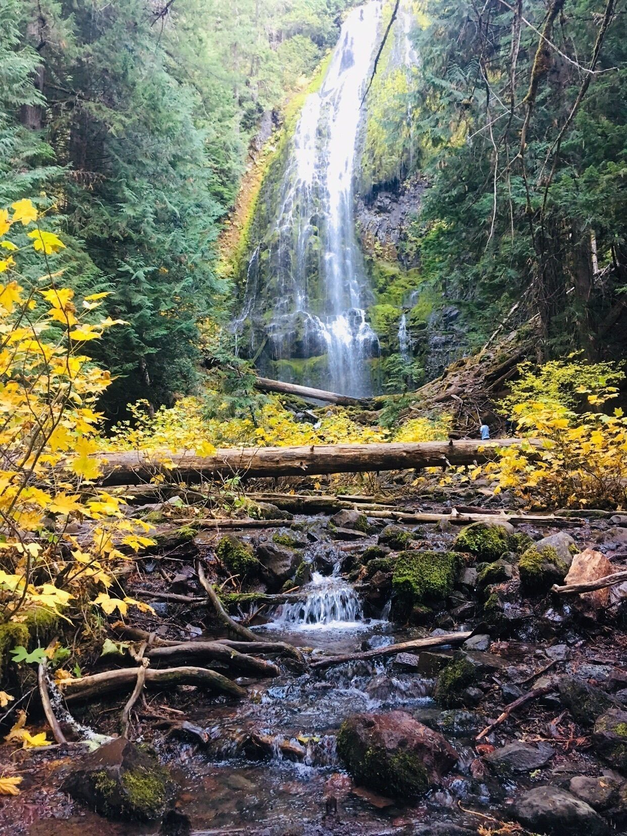 24 Hours Of Lemons >> Proxy Falls Loop Trail - Oregon | AllTrails
