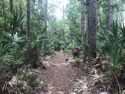 Best Trails In Losco Regional Park Florida Alltrails