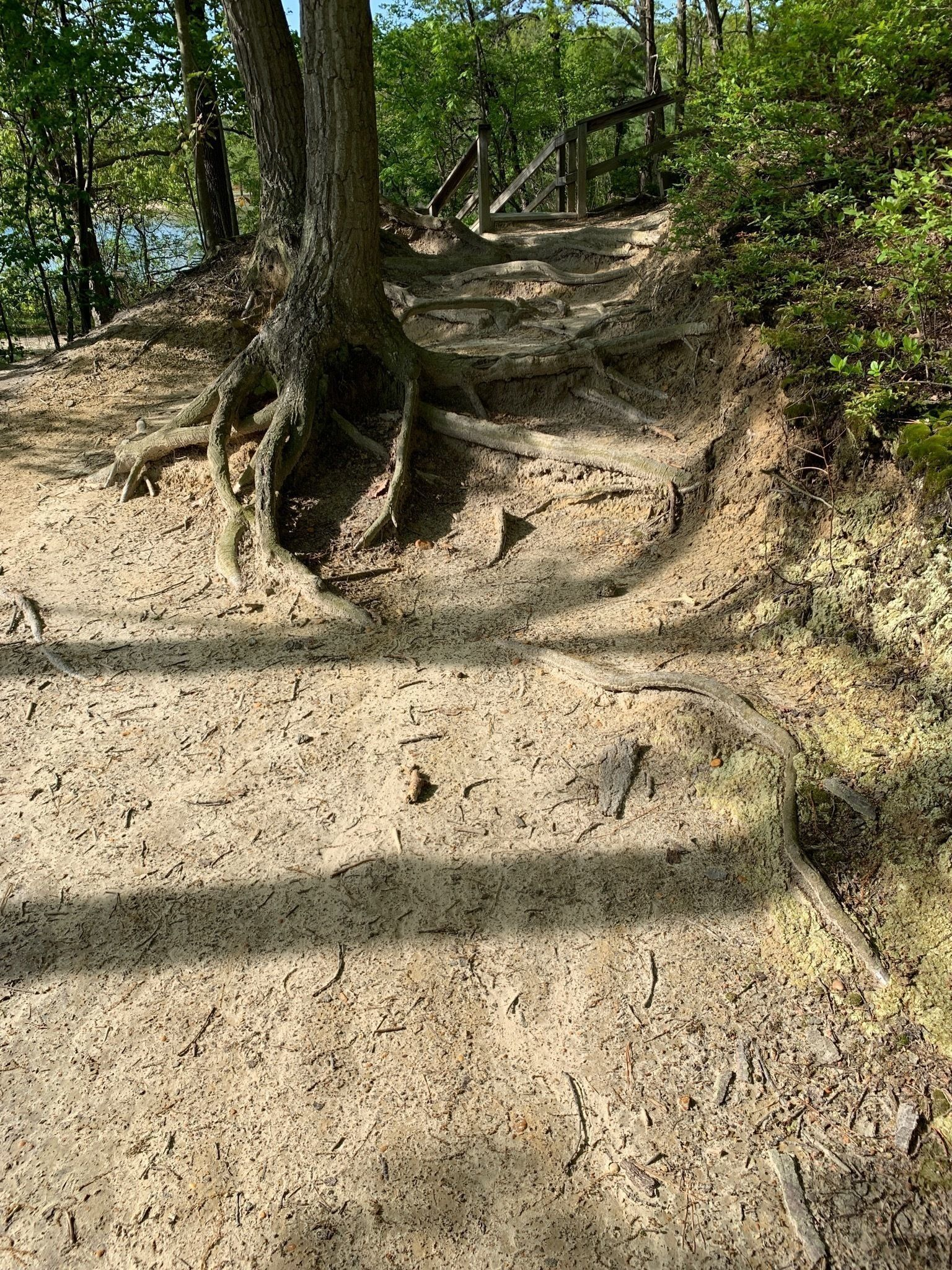 Best Trails in Cheesequake State Park - New Jersey   AllTrails