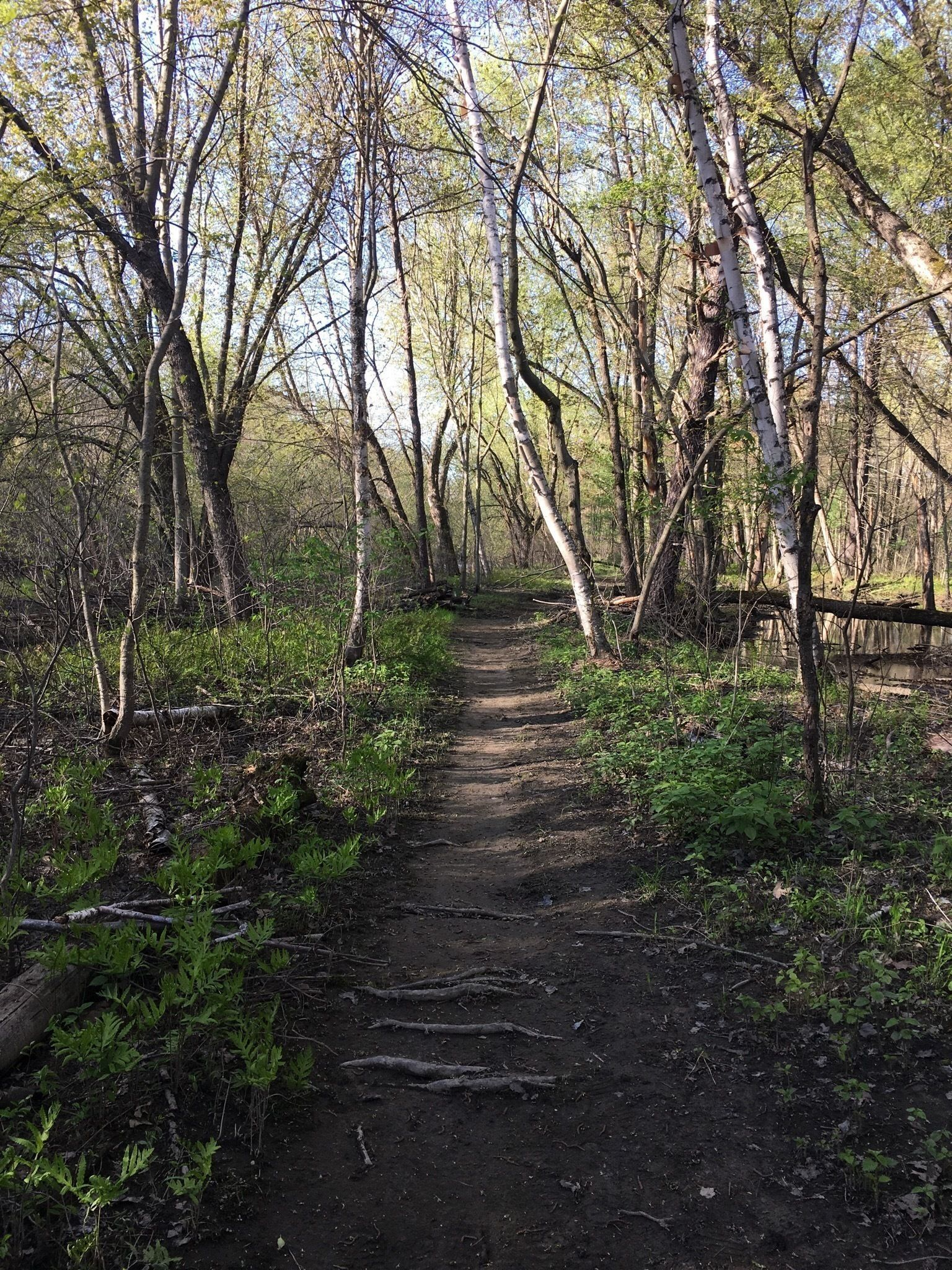 Peters Of Nashua >> Nashua River and Oxbow Trail Loop - Massachusetts | AllTrails