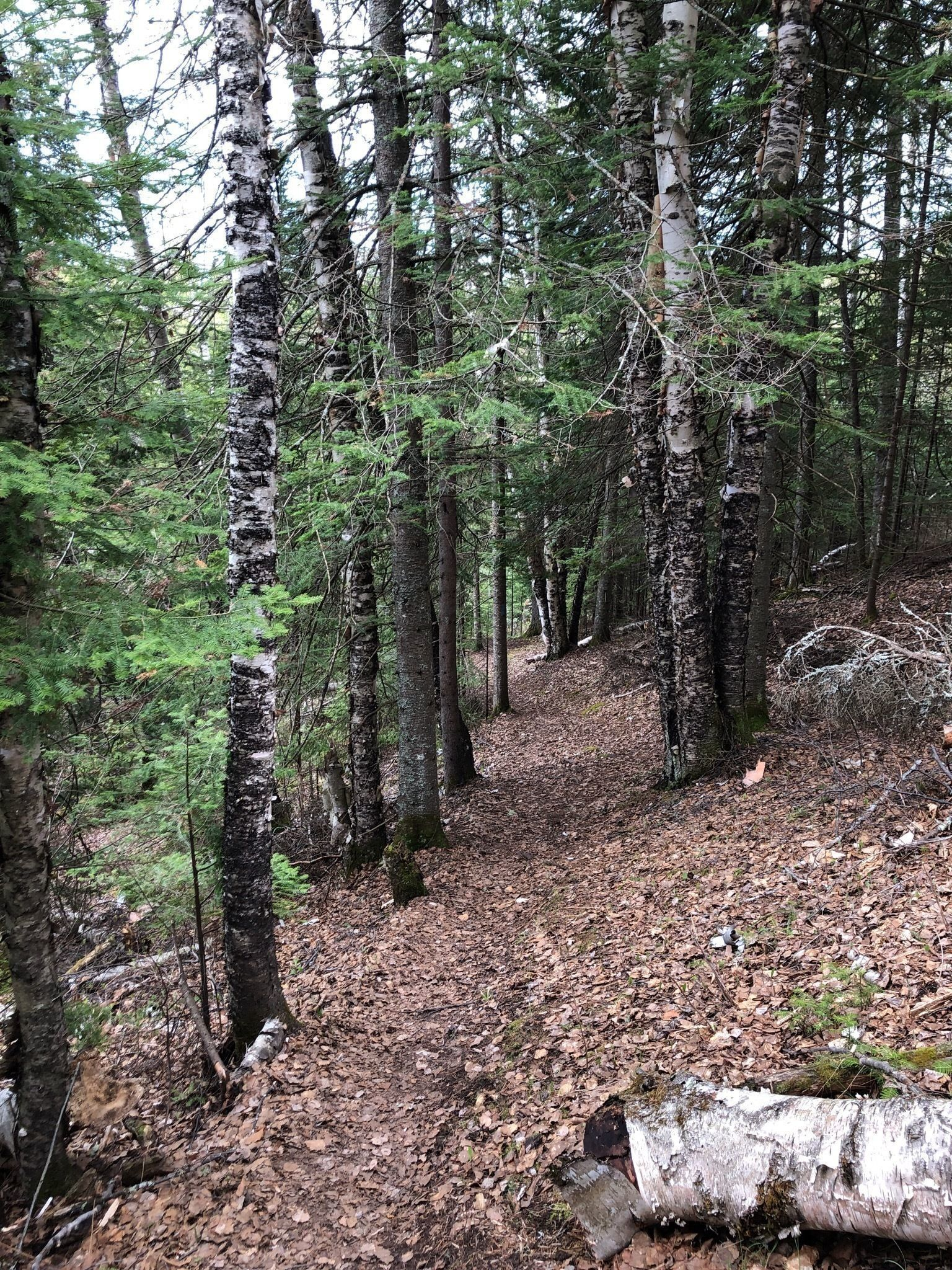 Best Dogs On Leash Trails in Superior National Forest