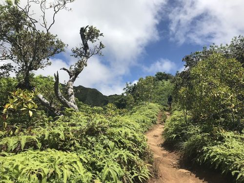 Kuliouou Forest Reserve
