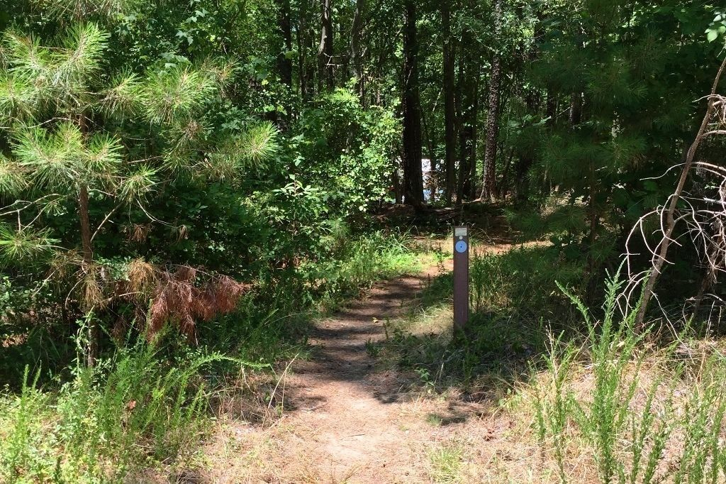 Underbrush In Owen Park Is So Dense Its >> Best Trails In Falls Lake State Recreation Area North Carolina