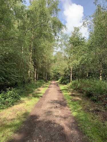 Cannock Chase Area of Outstanding Natural Beauty
