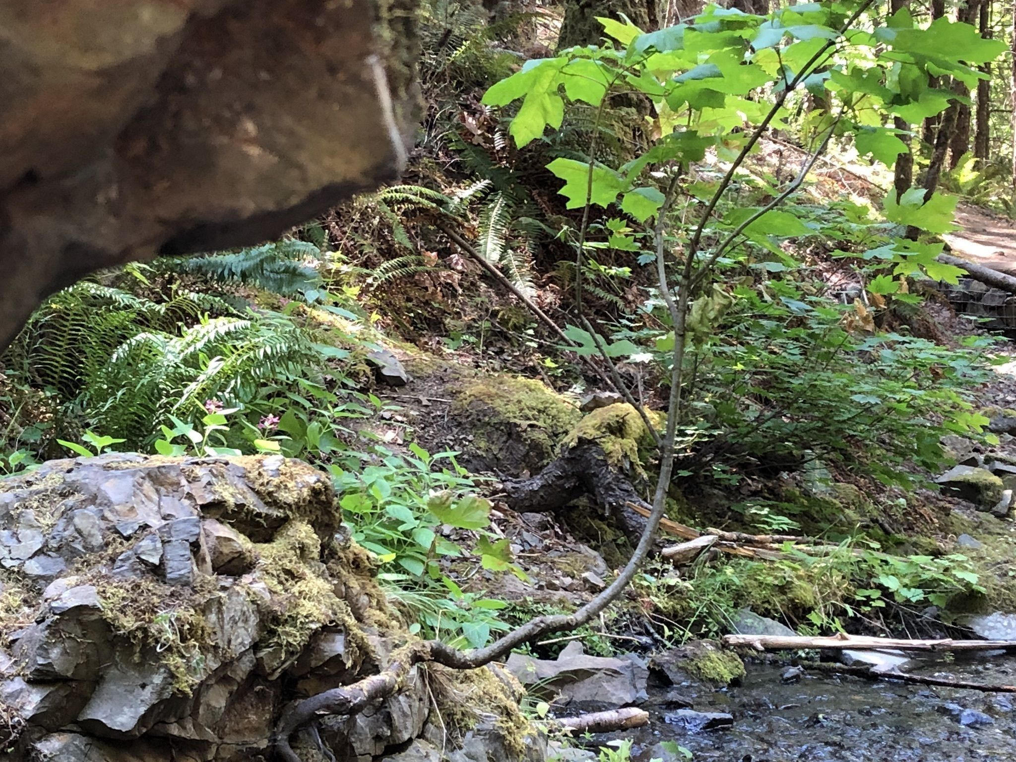 Cabin Creek & Hole-in-the Wall Falls via Starvation Creek Trail