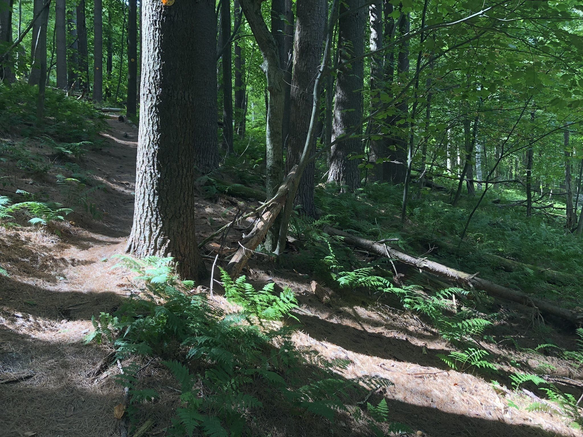 Best Trails in Berlin State Forest - New York | AllTrails