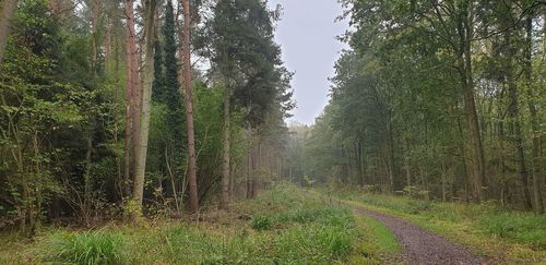Salcey Forest